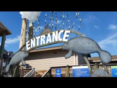 Manatee Viewing Center Apollo Beach Florida
