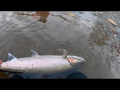 BaitTheHook Catching Steelhead In Alaska
