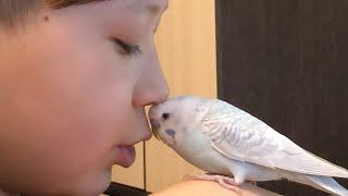 Мой говорящий попугай Чему я научил попугая за 7 мес.