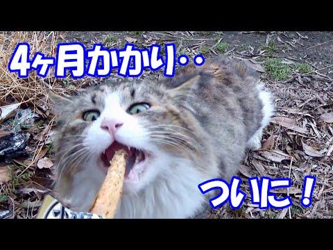 裏庭へやって来る野良猫のボス吉、4ヶ月掛かってついに‥!? Four months after, Boss-Cat comes from back yard is finally....!?