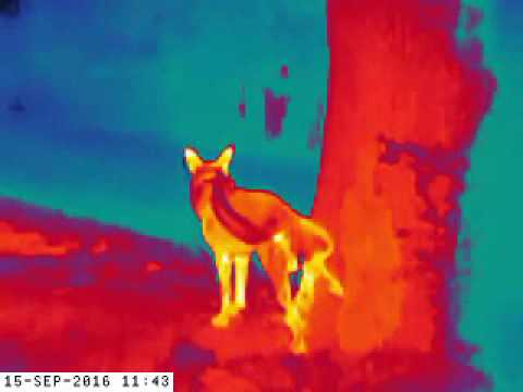 Thermal For Under $600! Flir Scout TK Initial Testing