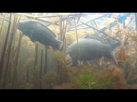 видео: Подводная видеоохота 2014