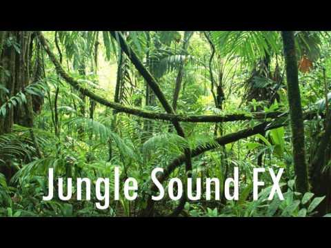 jungle-sound-effect-dna-free-sound-fx