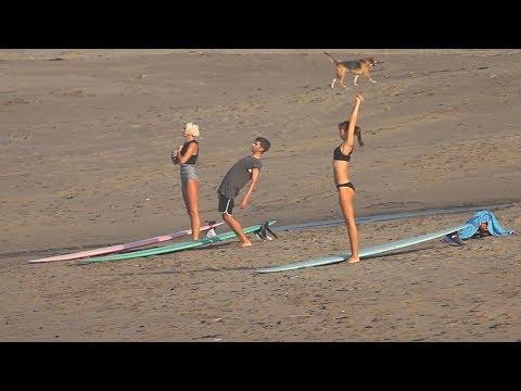 Babe Longboarders & A Surf Dog - Batu Bolong, 11 January 2019