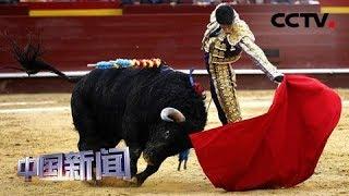 [中国新闻] 西班牙马洛卡岛重开斗牛比赛 | CCTV中文国际
