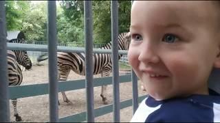 Vlog: Поехали в Ростовский зоопарк с детьми. / Видео