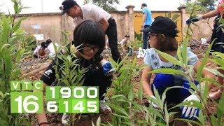 Trồng cây dược liệu giàu hơn trồng lúa | VTC16