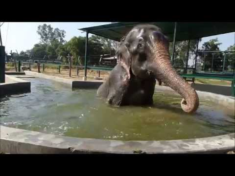 Raju Emerges Victorious!