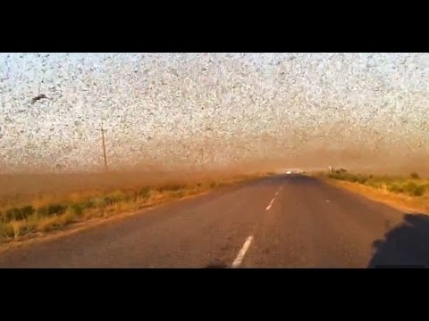 Canada Almost July Snow, Locust Plagues, Fish And Worms Fall From The Sky (180)
