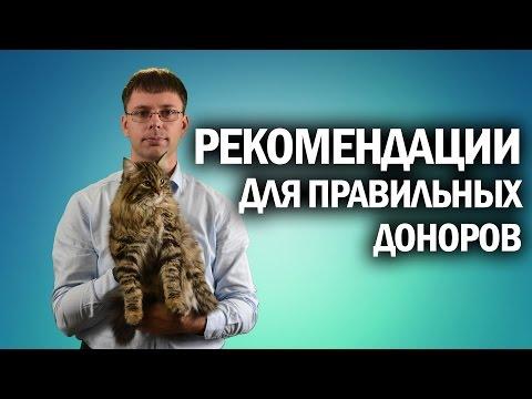 Рекомендации донорам   Как сдавать кровь и плазму   Канал Kotov Live