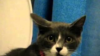 """Приучить кошку ходить на унитаз. Система """"Домакот"""""""