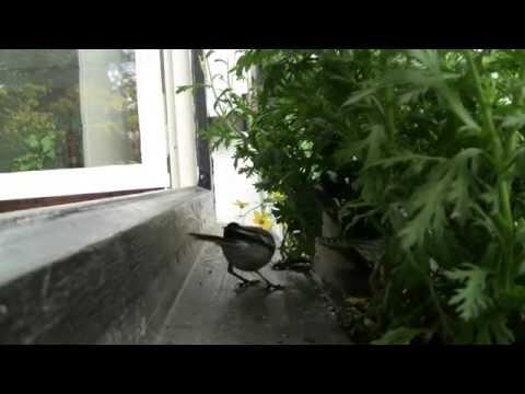 Kuckuck - Die Kinderstube eines Kuckucks