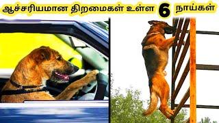 ஆச்சரியமான நாய்கள் || Six Amazing Dog Talents || Tamil Galatta News