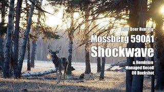 Deer Hunting with Mossberg Shockwave and Remington Low Recoil 00 Buckshot