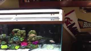 Kingfish Diy Canopy For 75 Gallon African Cichlid Tank