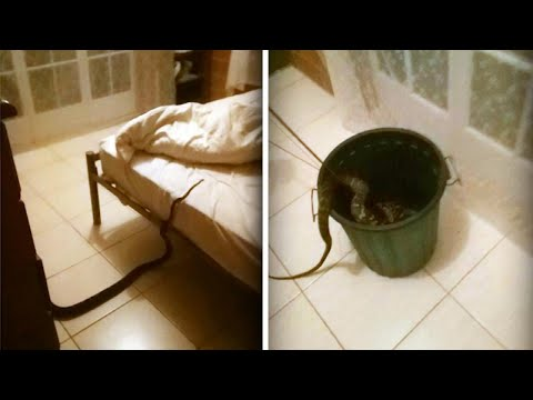 Lance Houston - Woman Wakes Up to Find 13-Foot-Long Python in Her Bed