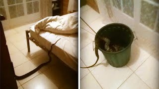 Australian Woman Wakes Up to Find 13-Foot-Long Python in Her Bed