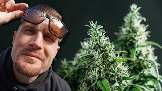 How to Grow MariĴuana (Step-By-Step) Week One