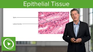 Epithelial Tissue: Structure & Functions – Histology | Lecturio