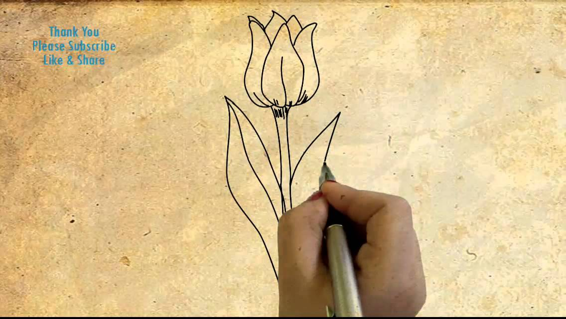 How to draw a Tulip Flower Drawing beautiful flowers with hand Easy  sketching