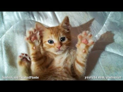 #Cute #Ginger #Kitten Loves Belly Rubs