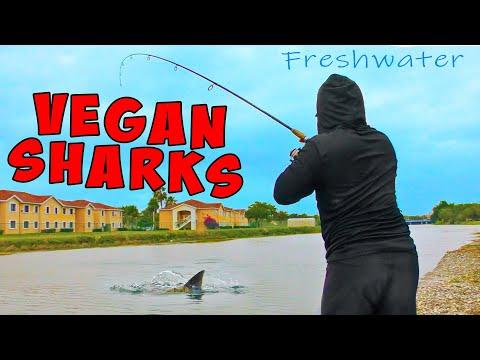 VEGAN SHARKS Topwater Blowups!!! Freshwater Shark Fishing