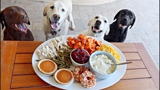 Dog's Review A Thanksgiving Feast!