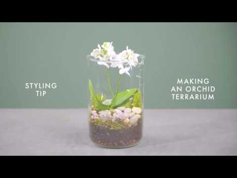 Uk Orchid How To Make An Orchid Terrarium Youtube