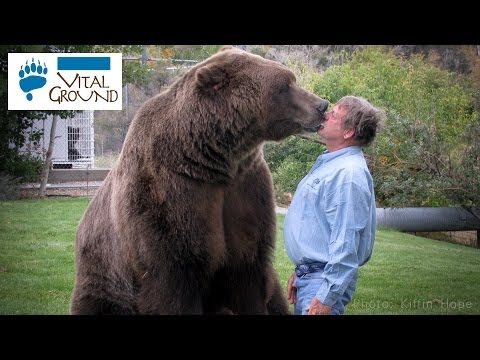 Huge Grizzly!