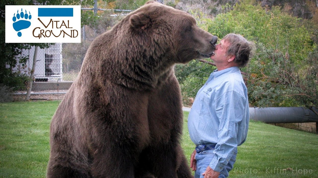 Aninimal Book: Huge Grizzly! - YouTube