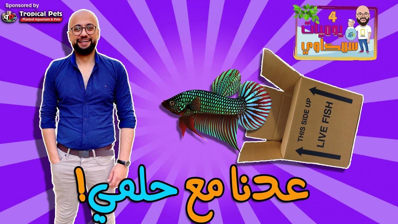 Download S4E21 - ! عدنا مع حلمي