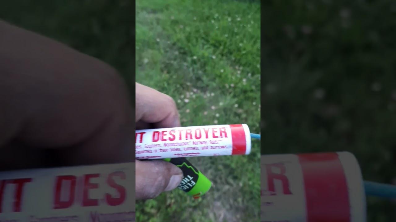 Will it kill wasps? & Will it kill wasps? - YouTube