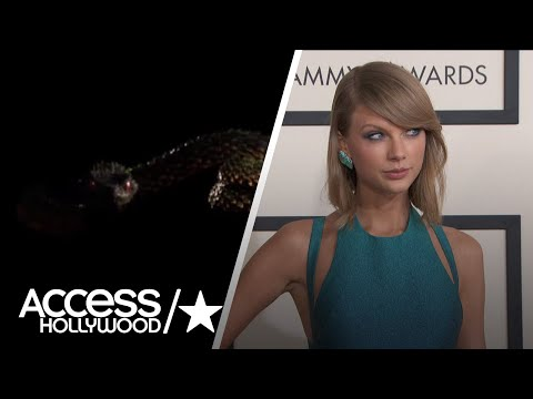 A Wildlife Expert Weighs In On Taylor Swift's Social Media Snake