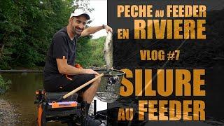 Pêche au feeder en rivière - Silure au feeder VLOG#7