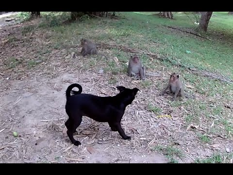 Monkey and Dog playing - Monkey funny Compilation
