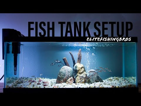 How To Set Up A Fish Tank - 20 Gallon Long #2
