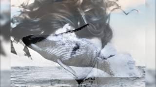 Святослав Свидригайлов кит