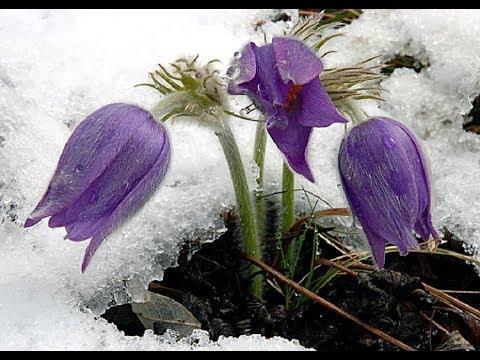 Что посадить чтобы клумба цвела с ранней весны до поздней осени