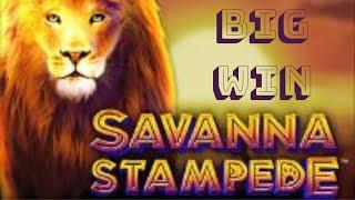 BIG WIN | Bonus Round on the Savanna Stampede video slot