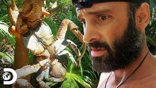 ¿Comerías este cangrejo gigante? | Peligro al desnudo | Discovery Latinoamérica
