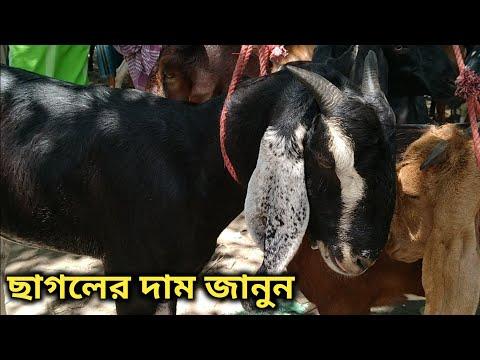 হজরতপুর পারাগ্রাম হাঁটে