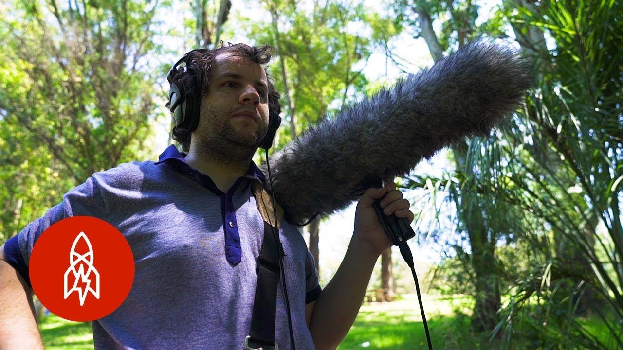 Blind Birdwatcher Sees With Sound