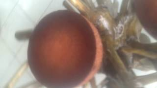 Meja dari batang kelapa