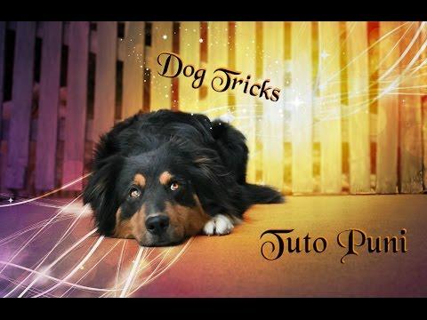 Dog Tricks- Tuto Puni - by Alie l'austrachien