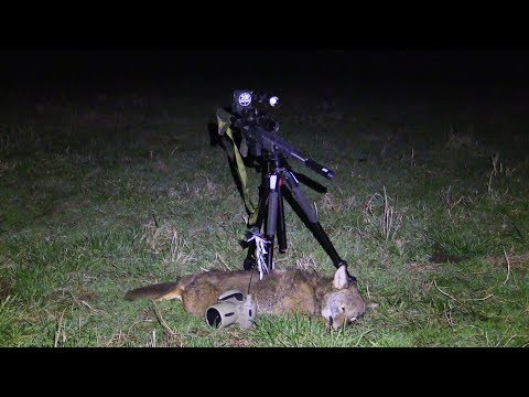 Best Night Vision Under $500 Coyote At 260 Yards
