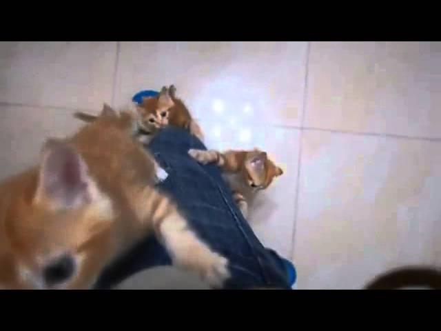Kitten climb the leg