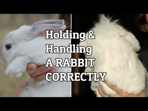 Picking Up A Rabbit/ Fixing Aggressive Behavior