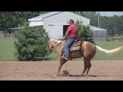 Celebrity Horse Trainer