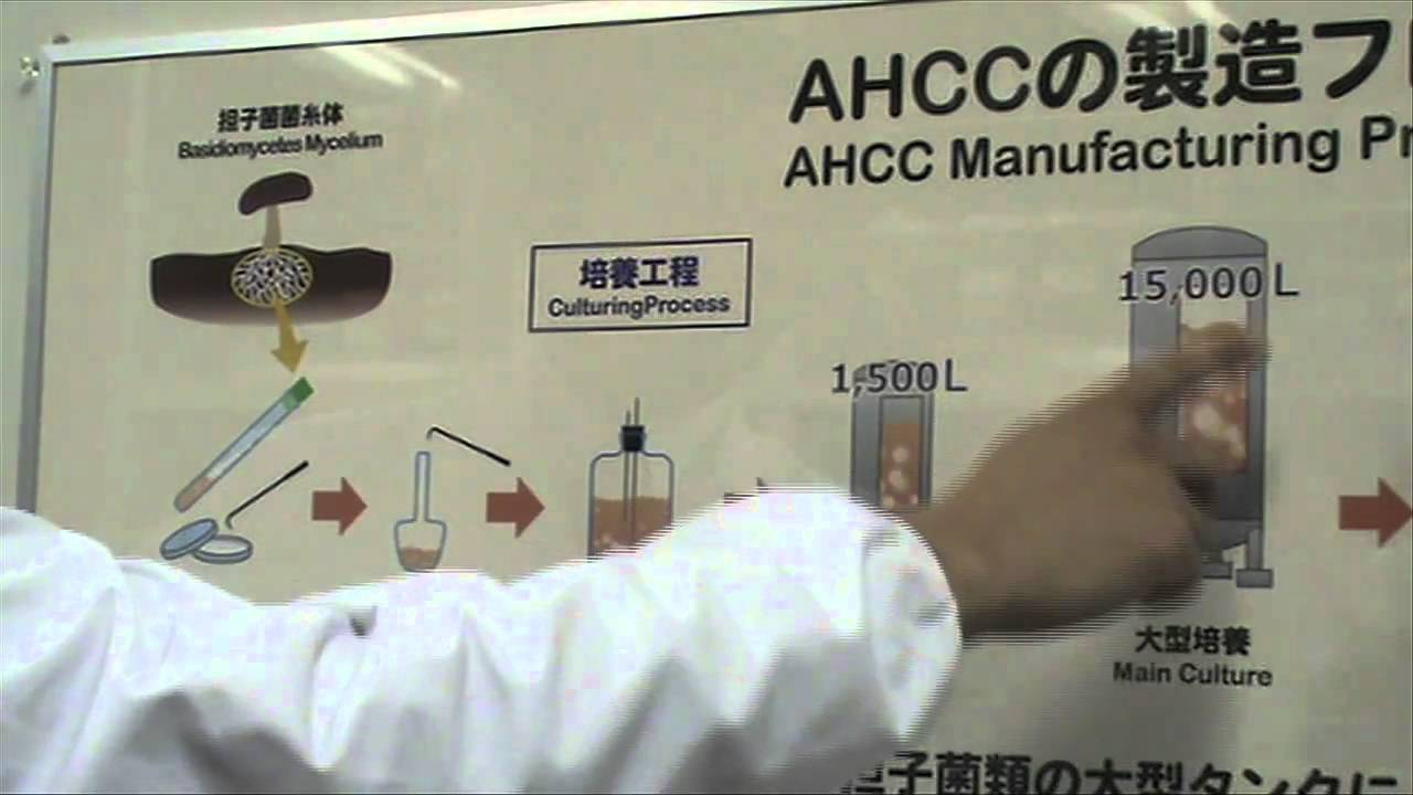 AHCC HPV Success 2019: Supplement Dosage for HPV Cure Reviews