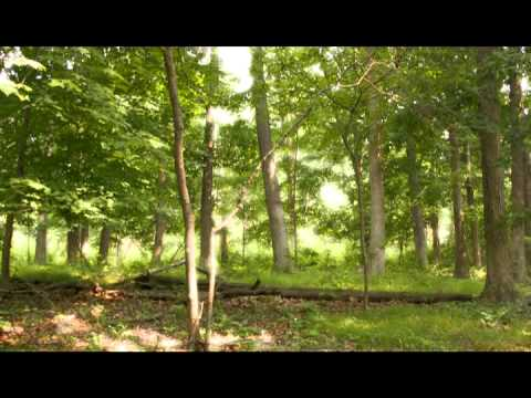 The Pinewoods Massacre